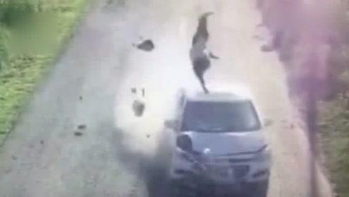 女子骑车遭酒驾男子撞飞:在空中翻滚数圈重重摔地,女子不幸身亡