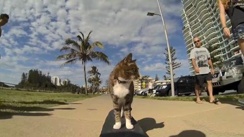 一只比主人还会玩滑板的猫,各种秀技术,网友:真想把滑板给砸了