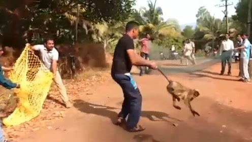 猴子屡次进村捣乱,被村民抓住以后,惩罚的过程让人笑喷了!
