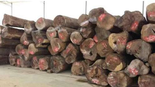 这种树曾被当柴火烧,如今却被卖上天价,一公斤9000元!