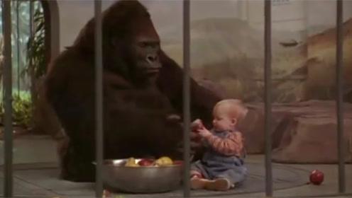宝宝被绑匪盯上,躲进大猩猩的笼子里,下一秒绑匪被大猩猩虐惨了