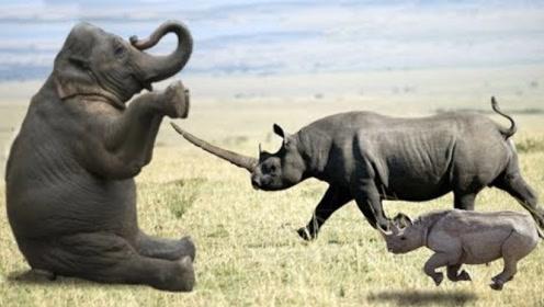 2吨的犀牛挑战5吨的大象,想给大象来下马威,大象的举动太搞笑