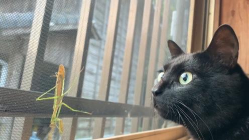 窗外来了一位不速之客,两只猫好奇心大爆发