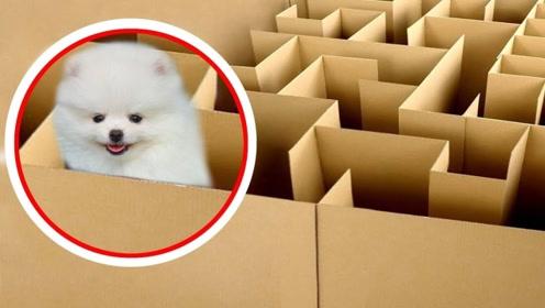 老外制作简易迷宫,强行将狗放了进去,网友:狗狗正在生无可恋中