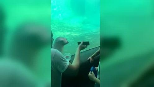 动物园一游客玩手机 海狮好奇凑近看模样逗趣