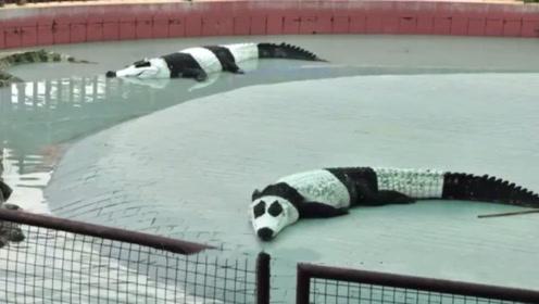 印度借不到中国熊猫,动物园想了一个办法,游客看到后爆笑不止!