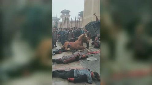 古装片场这匹马躺地装死,网友惊叹:演技炸裂!