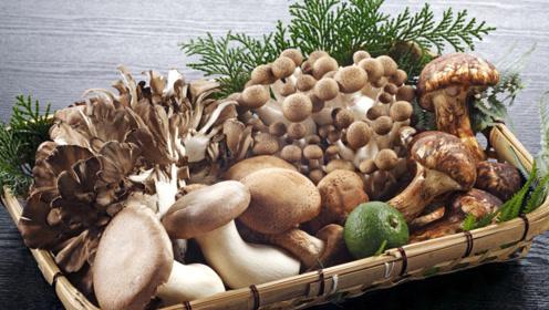 秋季多给家人吃这菜,润秋燥,补脾胃,提高免疫力,少生病
