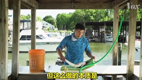 宰鱼大师Andrew教你如何使用日式Ikejime法