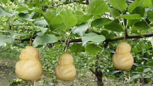 """泰国奇葩""""女人树"""",果实和女人特别相像,游客看完不淡定了!"""