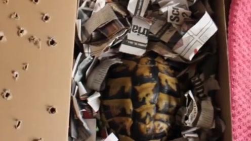 乌龟放进冰箱里会咋样?主人两个月后取出,乌龟:这个冬天有点短