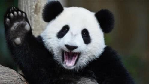 """日本饲养员都怎样""""对待""""大熊猫?要不是亲眼所见,肯定不信"""