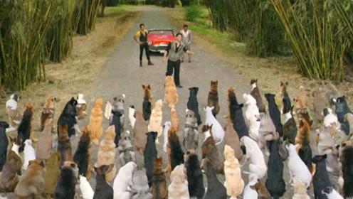 富豪狗狗被人欺负,带来数百兄弟,就连哈士奇也加入了