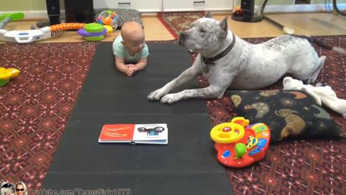 妈妈让小宝宝学习爬,小娃学不会,一旁狗子看不下去了,看我示范