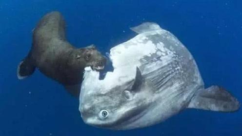 """最""""懒""""的鱼,依靠海水推动来行动,被攻击也懒得动"""