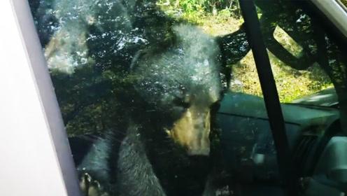 机智!两只小熊贪玩被困车内 鸣笛20分钟求救