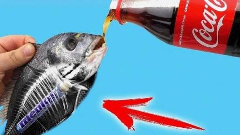 作死老外将鱼放进可乐中,一个月之后,出现了神奇的现象