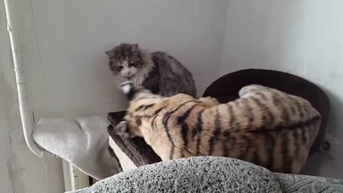 小老虎:看你小我让着你,别再得寸进尺了啊