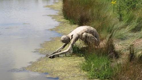 """女子在河边散步,发现一只""""怪物""""在喝水,镜头记录全过程"""