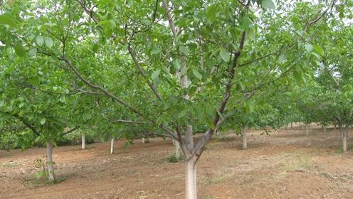 农民自己种的经济林,砍伐的时候还要办砍伐证,这样合理吗?