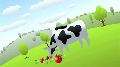 日本和牛每天都在听音乐,不仅每天吃饲料好吃苹果,真是大开眼界!