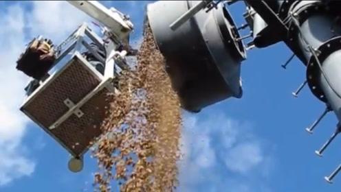 黄大仙太能偷了,偷了上百斤花生藏在上面,把这里当它的储存室了