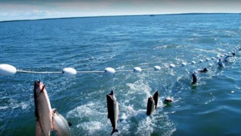 现代化的捕鱼技术太先进了!三十秒后,捕鱼场面让人震惊