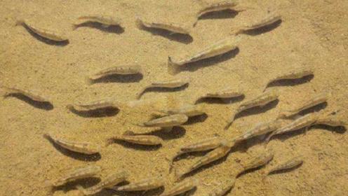 沙漠中有一种神奇的鱼,突破了生命的极限,一呆就是五万年!