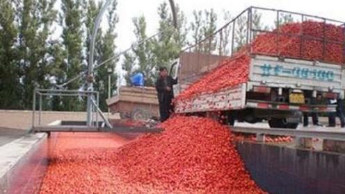 番茄酱真的是用番茄做的吗?镜头记录生产过程,看完还敢吃吗!