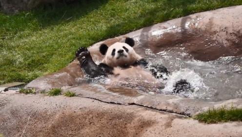 熊猫无聊开始演戏:我溺水了!快来救我呀!镜头记录搞笑画面