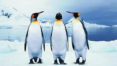"""考古学家新发现!比""""帝王企鹅""""更大的企鹅,体重超过成年男性2倍!"""