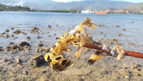 海边的小沙洞,大皮皮虾就躲在里面!