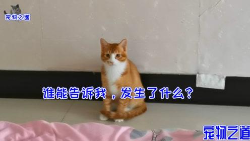 为赖在床上,小猫跟铲屎官斗智斗勇,机灵的动作和小表情逗笑主人