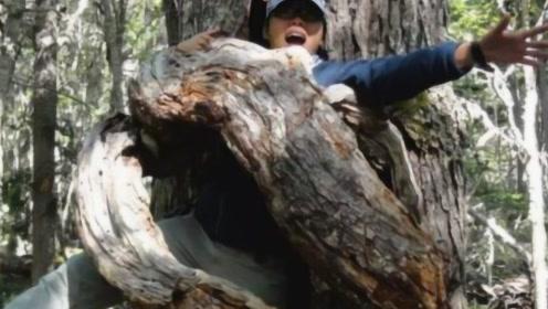 非洲森林惊现四千年古树,当地人却禁止女性靠近,背后真相令人后背发凉