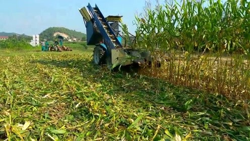 越南的农民的玉米收割机,看得出是哪国产的吗?