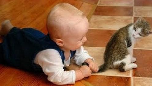 刚出生的宝宝摸猫咪尾巴,下一秒小猫的举动,承包我一年的笑点