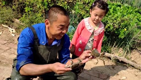 他承包100亩水塘养8万只螃蟹,年收入40万