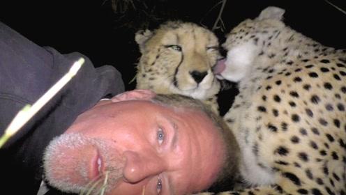 男子在野外露营,一觉醒来面前3只豹子,这是难逃一死?