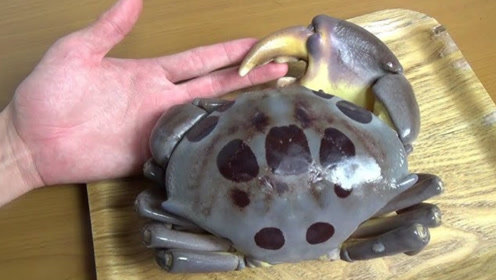 日本人真是什么都敢吃,连剧毒的红斑蟹都不放过,看完简直直流口水!