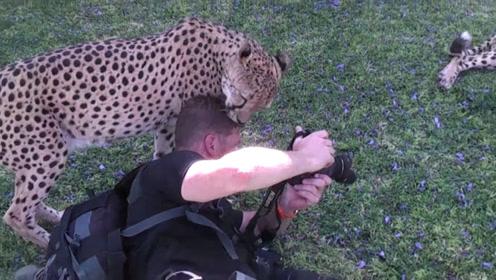 摄影师正在拍摄,一只猎豹突然冲了过来,下一秒的景象让人意外