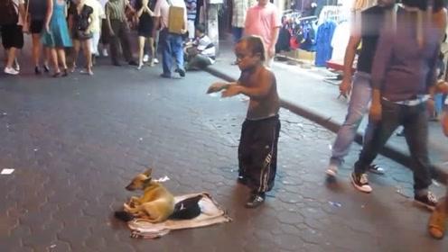 小矮人在街头表演,狗狗也跟着凑热闹,帮主人看钱