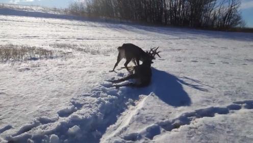 雪地中被拖出一条路,男子以为是动物捕猎,上前一看吓了一跳!