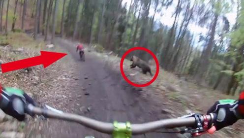 2名男子在森林中骑行,却被1只棕熊疯狂追赶,下一秒上演生死时速