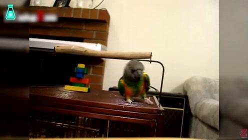 小鹦鹉们蹦迪,个个都是踩点狂魔,这节奏感也太好了吧