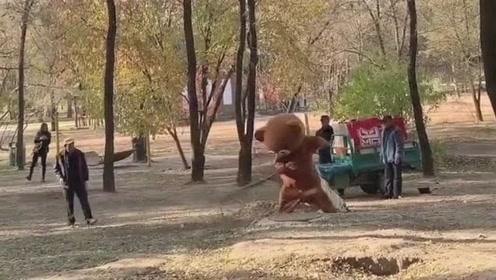 1只好心的网红熊,没事就去公园帮大爷扫地,墙都不扶就服你