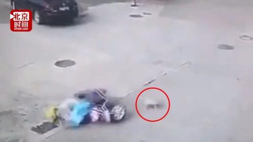 宠物狗未牵绳撞上骑车人 交警判罚:狗主人全责