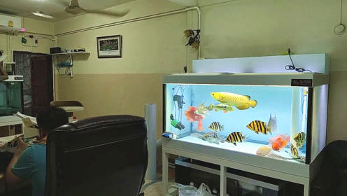 邻居在家中混养了一缸宝贝观赏鱼,走近一看,瞬间把我吸引住了