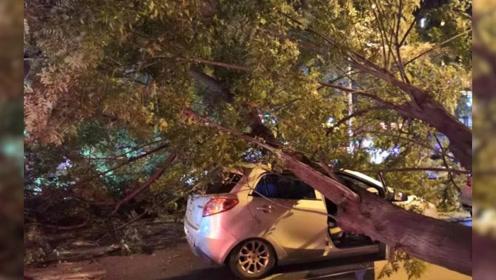 惊险!大树突然倒下砸中车辆 车顶砸穿车门挤压变形 所幸4人无大碍
