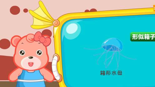"""嘟拉教育百科 海洋的""""箱子"""",有毒的箱形水母!"""