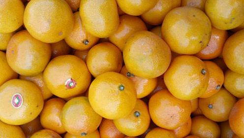 橘子也分公母,超甜橘子这样选,看准这地方,汁多肉嫩,一挑一个准